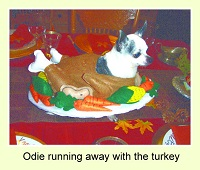Shannon C  Odie Turkey1
