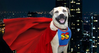 SuperSmileyHeroDog