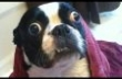 Ultimate Funny Dog Videos Compilation 2013 [HD]