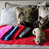 store-Pet-Throws